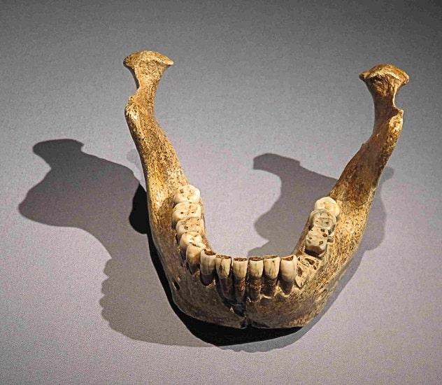 Mandíbula conservada de un Homo Heidelbergensis