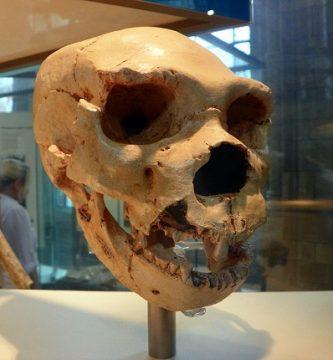destacada homo heidelbergensis