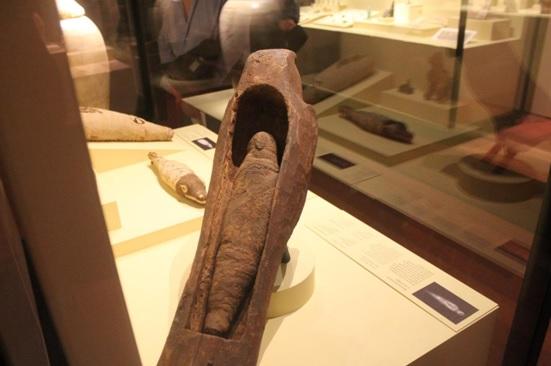Momificación de un animal, en este caso un halcón, expuesta en el Museo Arqueológico Nacional